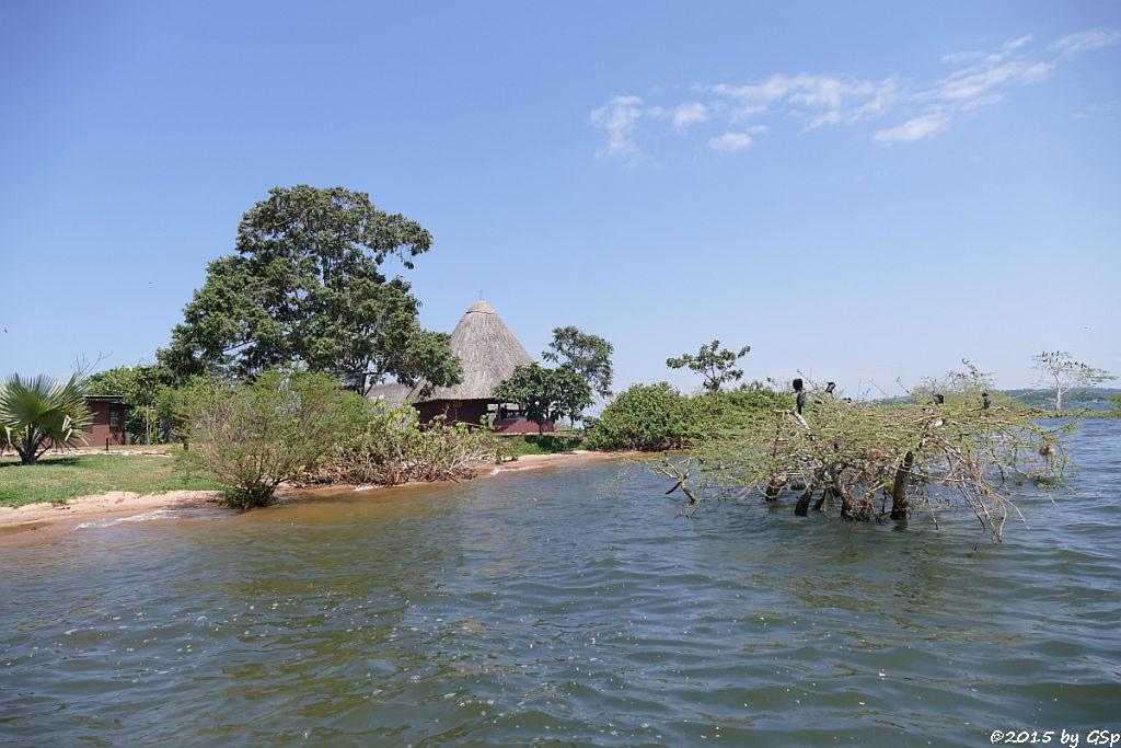 Nilwarane und Vögel auf Ngamba Island - 30 Fotos