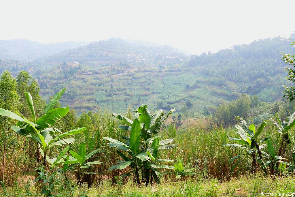 Fahrt nach Kibuye (Karongi) - 34 Fotos