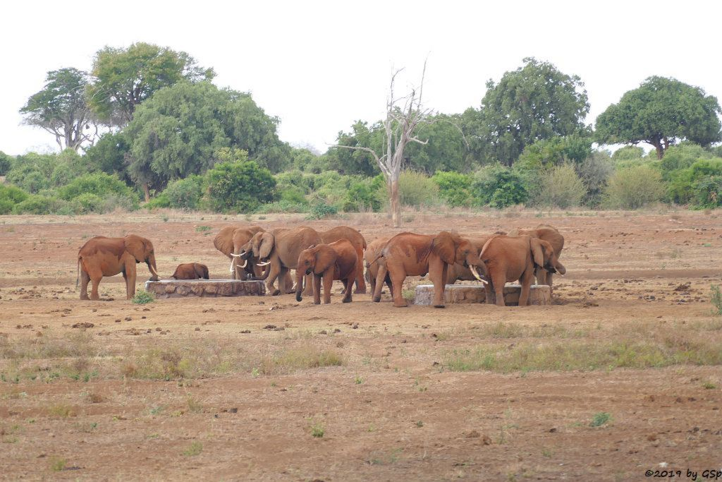 Elefant am Wasserloch vor dem Sentrim Tarhi Eco Camp