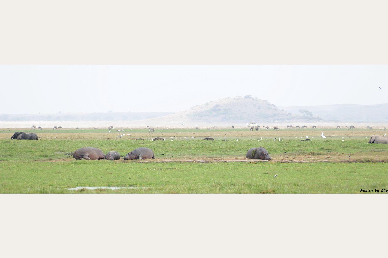 Elefant, Flusspferd (Nilpferd), Kapbüffel (Kaffernbüffel, Schwarzbüffel), Böhm-Steppenzebra (Grantzebra), Östliches Weißbartgnu vor Observation Hill