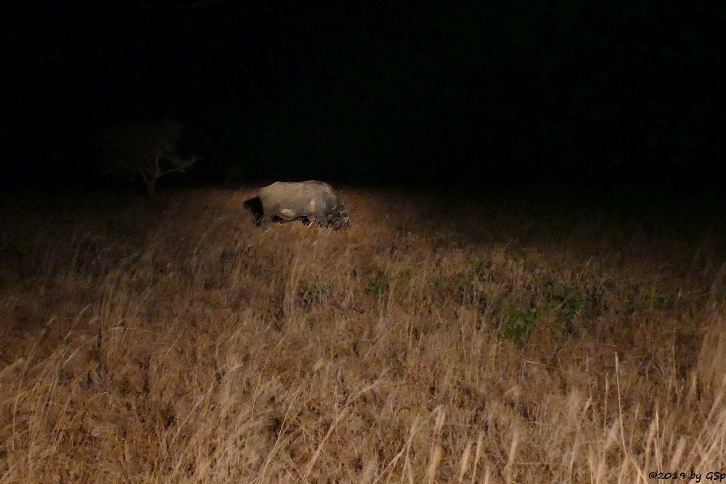 Kapbüffel (Kaffernbüffel, Schwarzbüffel)