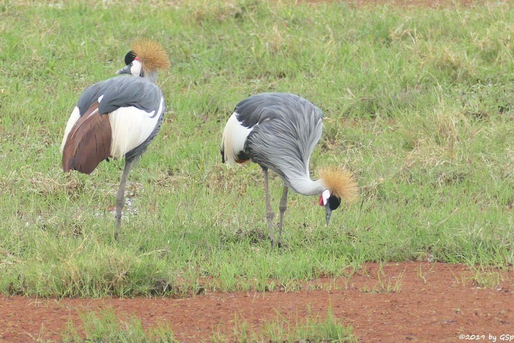 Ostafrikanischer Kronenkranich