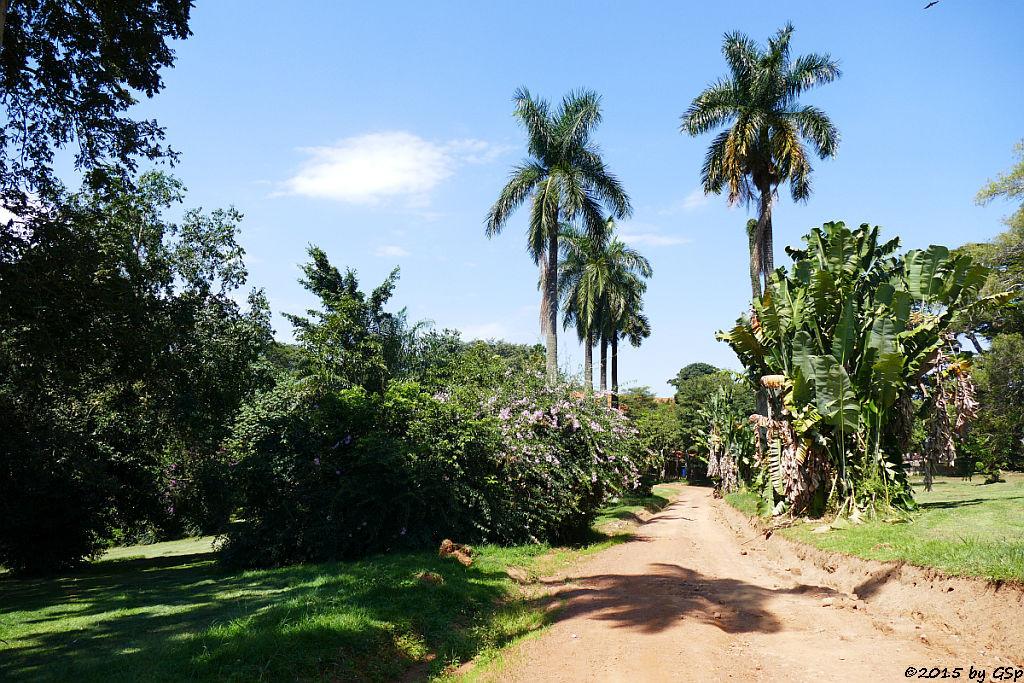 Botanischer Garten, Entebbe - 45 Fotos