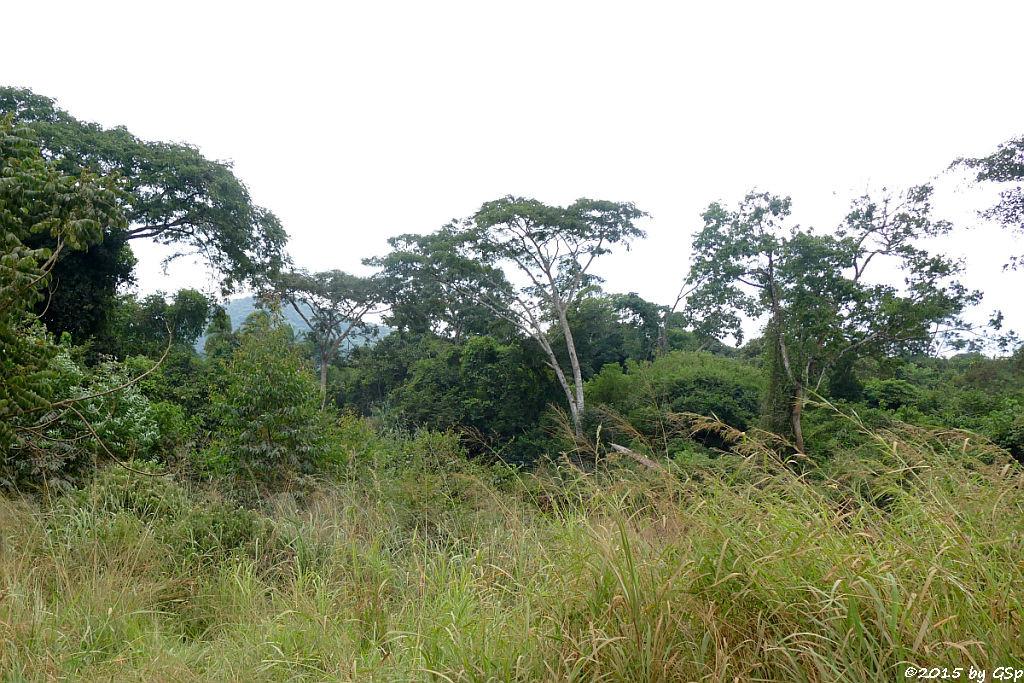 Bugoma-Wald Ende