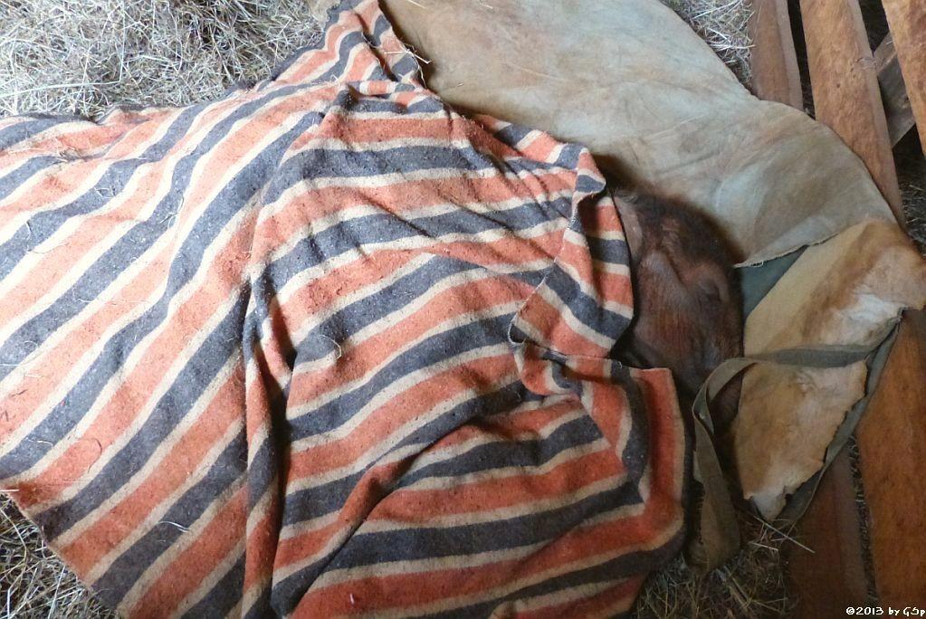 AJABU, geb. am 4. April 2013, gefunden im Tsavo Ost NP, gestorben am 21. August - 1 Woche nach meinem Besuch