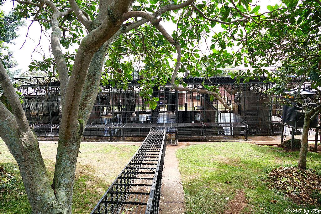Schimpansen-Nachtquartier