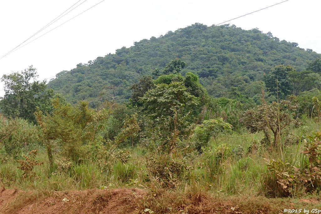 Beginn Bugoma-Wald