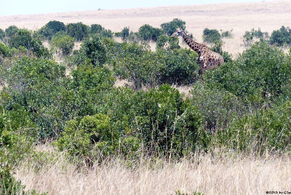 Massai-Ggiraffe