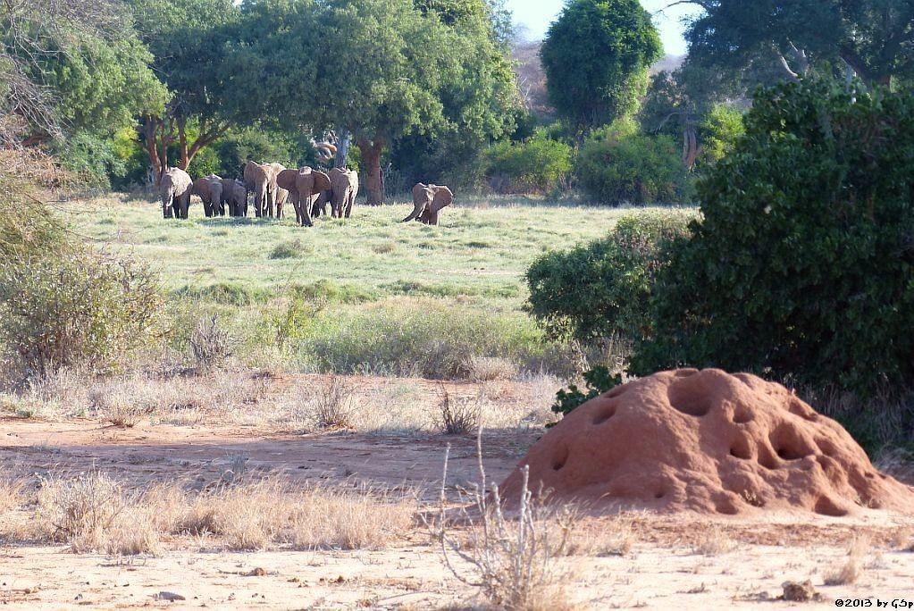 Elefant, Termitenhügel