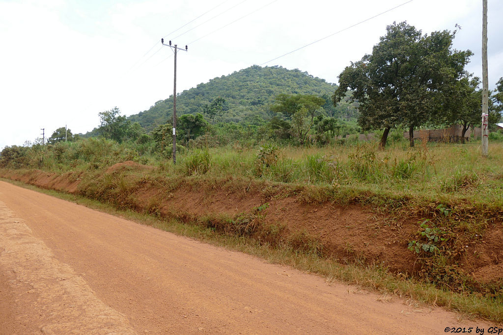 Bugoma-Wald Anfang
