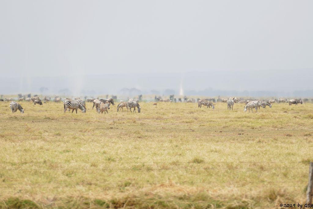 Böhm-Steppenzebra (Grant-Zebra), Elefant, Östliches Weißbartgnu