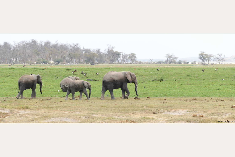 Elefant, Flusspferd (Nildpferd), Rotschnabelente