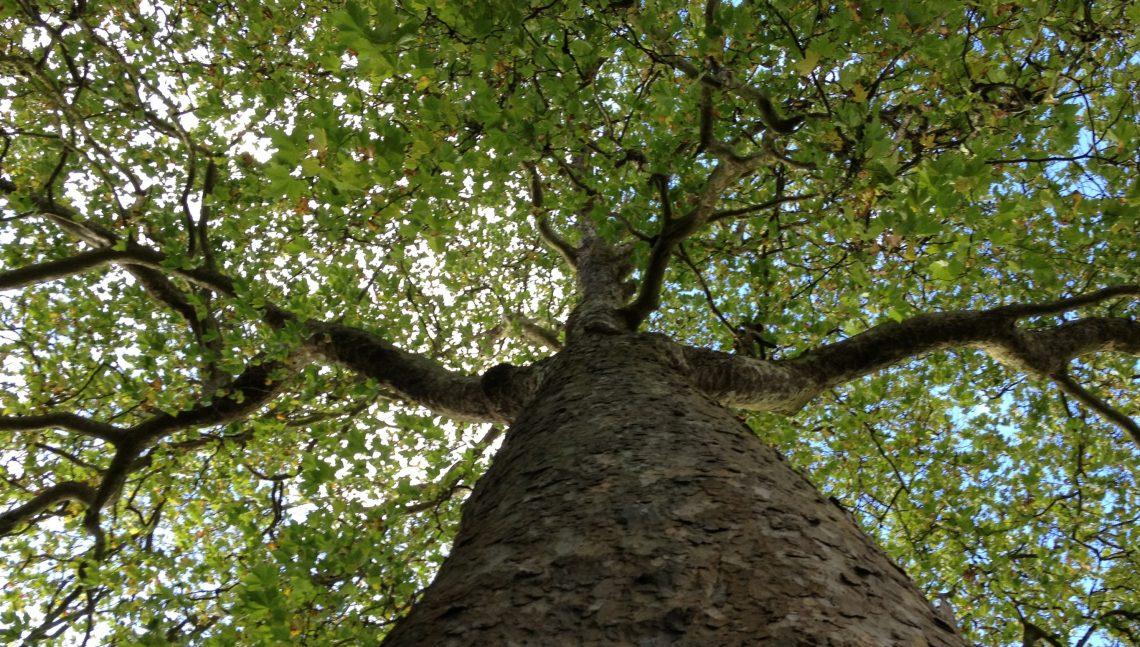 Baumpflegespezialist (w/m) - Ref. Nr. 5184