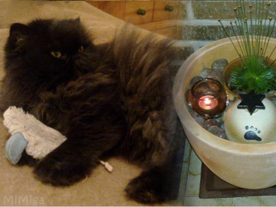 gato-persa-urna-ceramica-grupo57-joya-memoria-personalizada-mi-miga.jpg