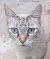 la-gatoteca-cat-cafe-madrid-spain-cat-alba