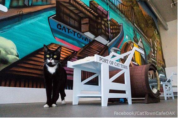 1º Cat Café de EE.UU.