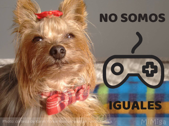 un-animal-no-es-una-play-station-yorkie-karim