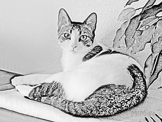 ¿10 razones para adoptar a un gato?
