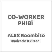 mi-miga-conocenos-co-worker-phibi-alex-roombito-miracle-kitten