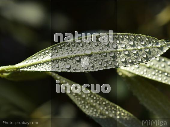 Cuidado: Difusores, aceites esenciales, árbol de te y neem