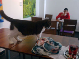 katzentempel-munich-cat-balou-promoter-thomas-leidner