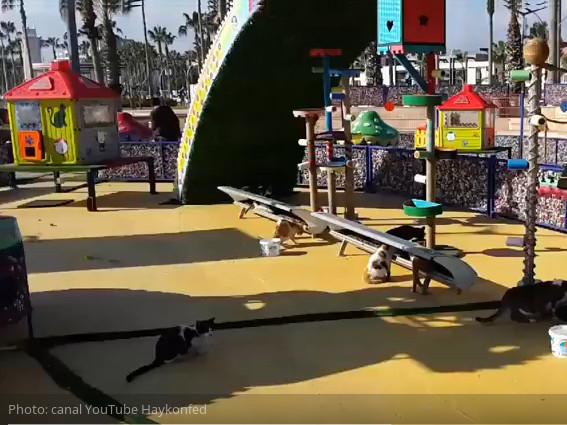 Genial: Un parque all-inclusive para callejeros