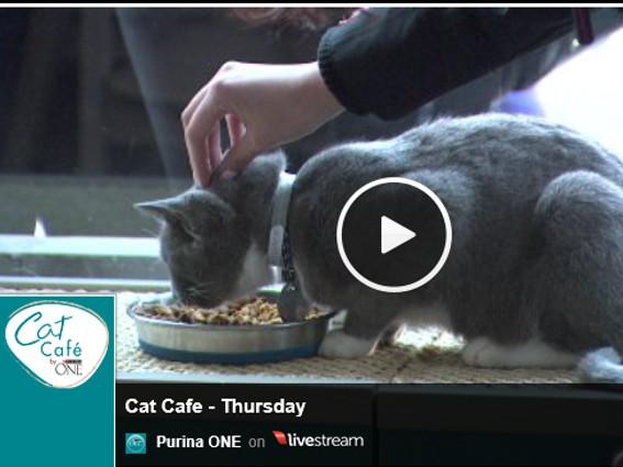 Cat Café manía en EE.UU. + Canadá