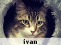 la-gatoteca-ivan