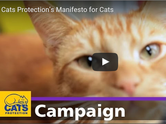 Manifesto for Cats