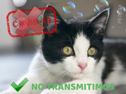 coronavirus-covid-19-animales-gato-no-transmitimos