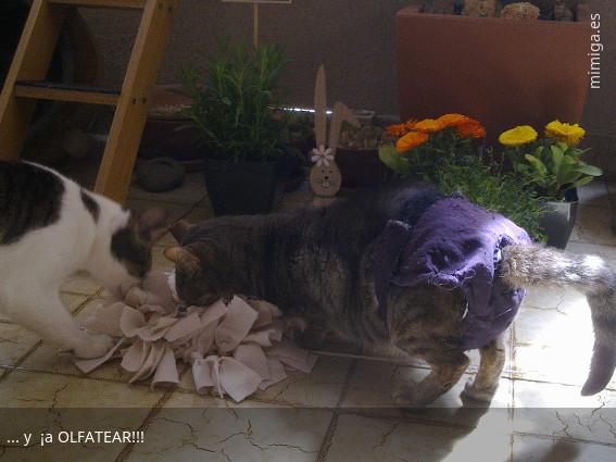 mi-miga-alfombra-olfativa-gatos_7