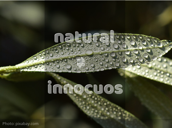 natural-not-equivalent-of-innocuos