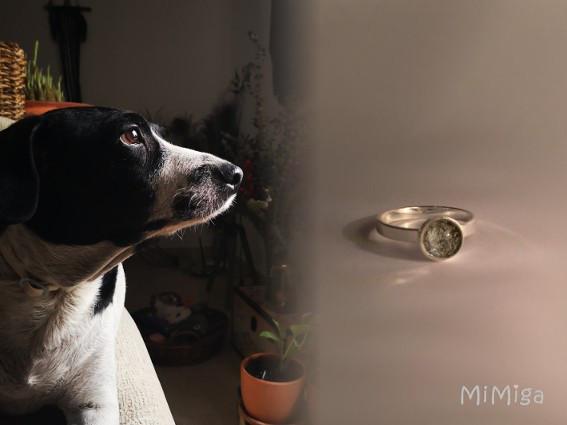 joya-artistica-mi-miga-anillo-recuerdo-memoria-plata-ley-pelo-animal-perro-badhi