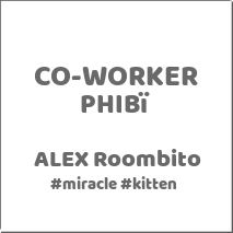 mi-miga-conocenos-co-worker-phibi-alex-roombito-miracle-kitten