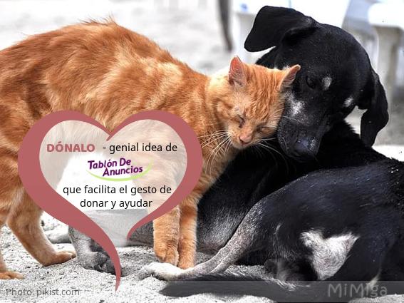 tablon-de-anuncios-donalo-ayuda-protectoras-animales