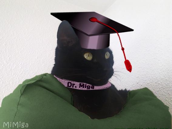 gato-inteligente