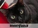 la-gatoteca-morgana