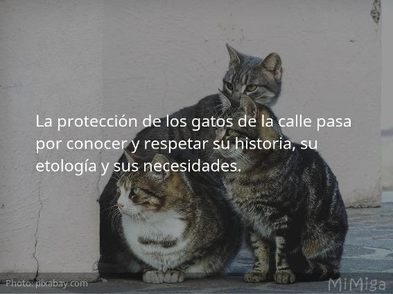 la-proteccion-de-los-gato-de-la-calle