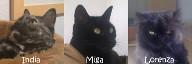 El equipo G de MiMiga