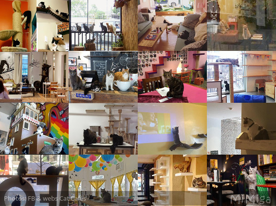 cat-cafes-america-canada-new-zealand-collage