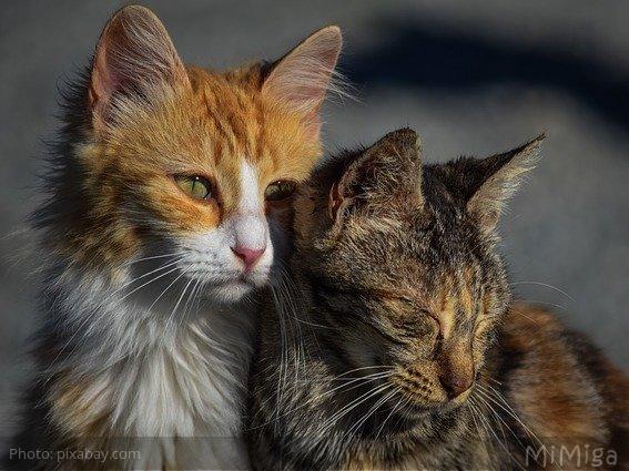 El duelo no es sólo de humanos: El duelo felino