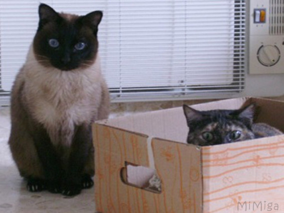 cats-playing-carton-box