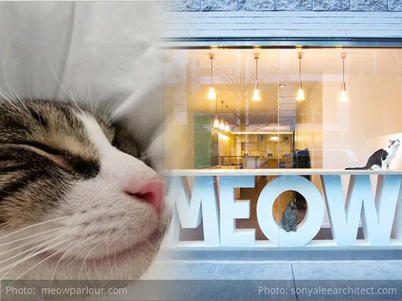 Nueva York's 1º Cat Café abre el 15 de Diciembre 2014 - gracias a ¡UN GATO!