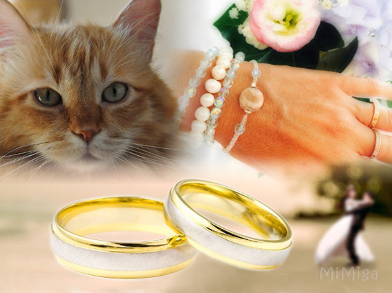 Your cat at your wedding