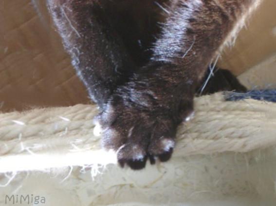 gato-manos-unas-garras-sisal