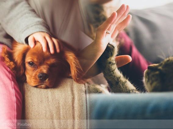 Inmunocomprometidos & mascotas: SI