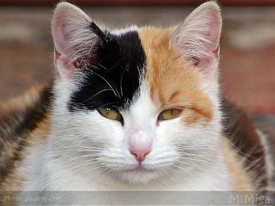 El parpadeo lento felino - comunicando en positivo
