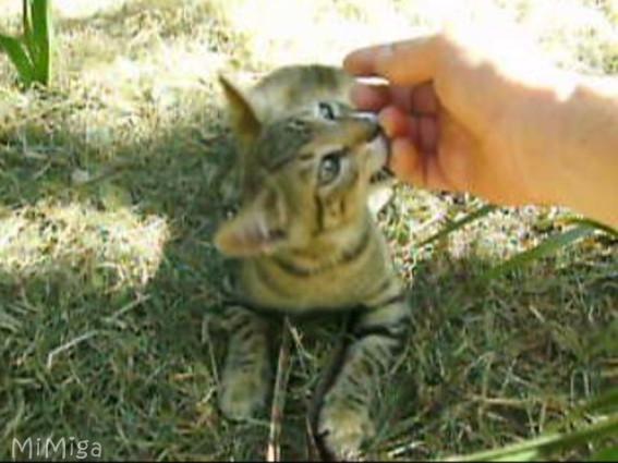 gato-mordiendo-mordisquitos-de-amor
