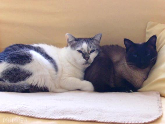 2-gatos-que-se-llevan-bien