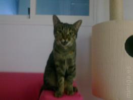 la-gatoteca-pixulina